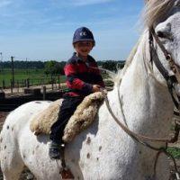 Generando experiencias: caballos y niños