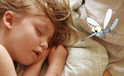 mosquitos-bb